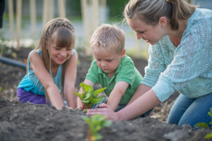 What to Plant Now for Spring No Matter where You Live