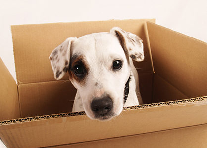 Help Your Pet Transition to a New Home