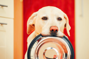 The Best Breeds for First-Time Homeowners