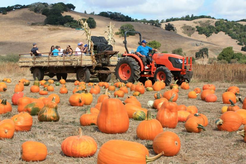 2019 El Dorado County, California Pumpkin Patches And More...